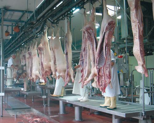 Линии убоя КРС, свиней, овец, коз и кроликов